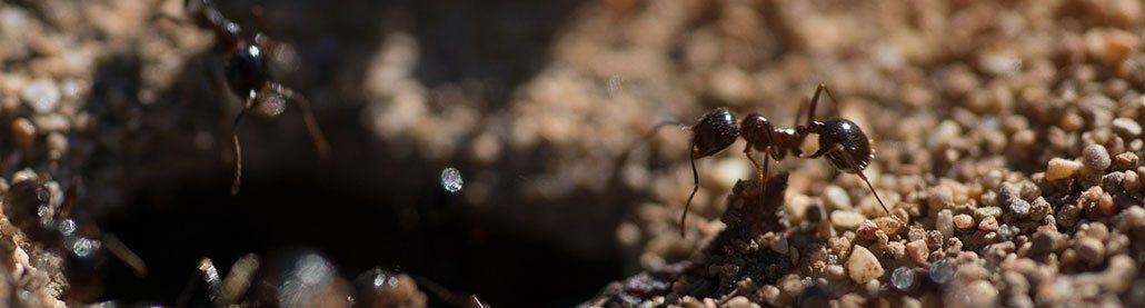 ants nesting
